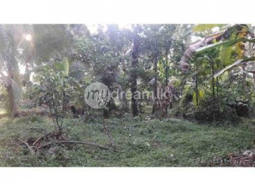 Land In Waboda Idigahamula
