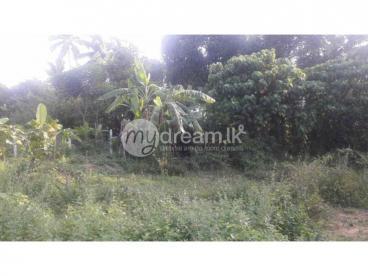 Land In Ragama Thewatha