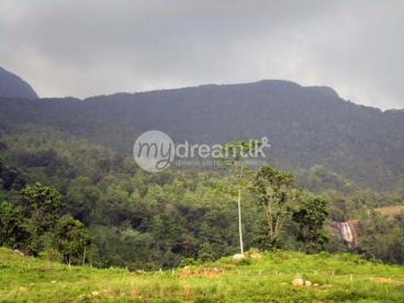 Beautiful 75 Acres Land for Sale in Kithulgala.