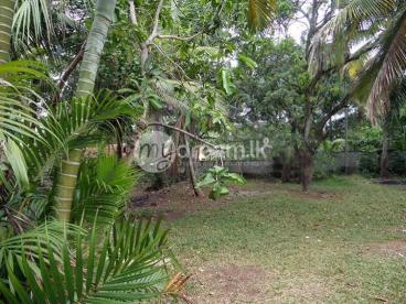 40 Perches Land for sale at Gampaha
