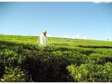 108 Perch of FREE HOLD Land for sale at Nuwara-Eliya.