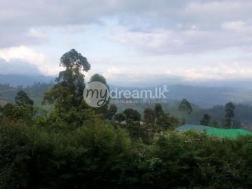 Land for Sale in Nuwara Eliya, close to Hakgala Botanical Garden.