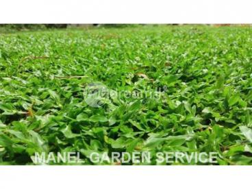 Grass Wholesale & Retail Dealers