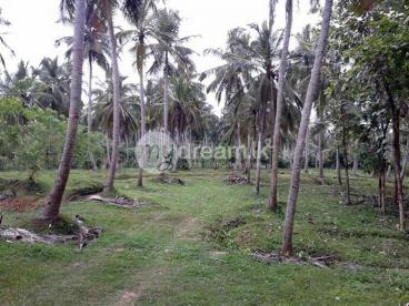 2 Acres Coconut Land for Sale at Mirigama