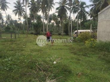 Land for sale near Aththanagalla Raja Maha Viharaya, Gampaha