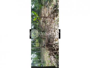 Land for Sale In Henegama